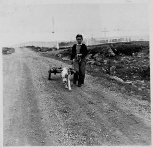 Photo Credit: The Rooms Provincial Archives. VA 15A-31.8; Boy with dog cart, St. Lawrence. NL