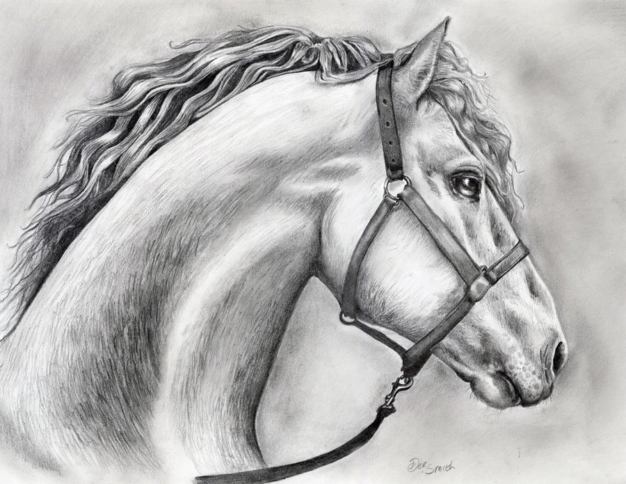 Images of Easy to Draw Horses Horse Easy Horse Drawings