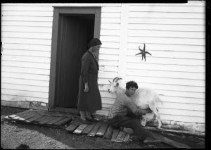 Photo Credit: The Rooms NA 24116; Teenage boy milking a goat.